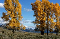 Fall landscape in Yellowstone National Park, Wyoming, USA