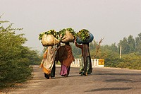 Women carrying produce walking along the highway