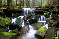 Sol Duc River, Olympic National Forest, Washington, USA