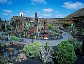 Cactus, Garden, Lanzarote, Canary, Islands, Spain