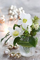 Posy of Christmas roses and spruce in a glass