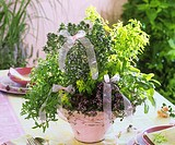 Thyme, sage, oregano, savory, hyssop in flowerpot