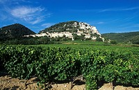 Wine-growing near Seguret, Côtes du Rhône, France