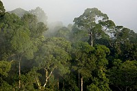 Borneo, Danum Valley Conservation Area, Sabah, Malaysia