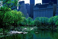 POND CENTRAL PARK. MIDTOWN MANHATTAN. NEW YORK. USA