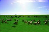 the Re Erba Grassland,Ruoergai county,Aba,Sichuan Province,China