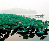the lotus pool of the West Lake in Hangzhou city,China
