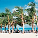 sandy beach and palms,Hainan Province,China