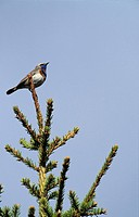A bird perched on a branch with sky