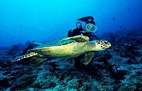 Female diver and tortoise swimming over the seabed