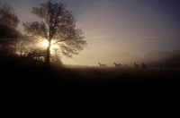 Silhouette of the horses and trees at dusk