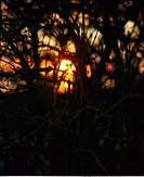 Silhouette of bushes at sunset, Skane, Sweden
