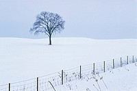 Lone Tree in Snow Covered Winter Landscape, Ottawa, Ontario, Canada