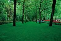Keukenhof Gardens,Holland