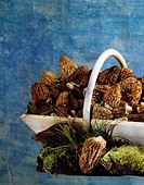 morel mushrooms