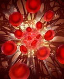 In this illustration, blood cells break free from a blood clot. Red blood cells are shown breaking apart strands of fibrin, which hold blood cells and...