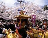 Sakura_matsuri, Kyoto, Hirano Shrine, Japan