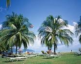 Coconut Sea Golden Phoenix Suns resort Penang Island Malaysia