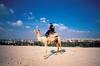 Camel,Egypt
