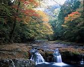 Kikuchi ravine of autumn, Kikuchi, Kumamoto, Japan