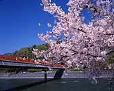 Cherry Blossoms spring Asagiri bridge Uji Rakunan Kyoto Japan Sky Mountain Bridge River Tree Flower Plant Pink