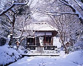 Snow Jojakko Temple, Nio_mon Gate Kyoto Kyoto Japan Temple Tree Snow White