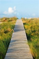 Wooden beach access walkway