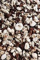 Close up of beach worn rocks and shells in Maui, Hawaii, USA