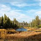 Landscape with stream and field in Yellowstone National Park, Wyoming