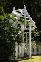 Arbor with rose bush and white picket fence on Bald Head Island, North Carolina