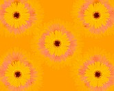 Closed Up Image of Five Yellow_colored Geberas, High Angle View, Illustration, Illustrative Technique
