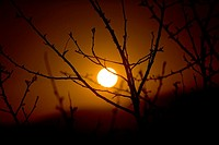Silhouette of thorn tree in front of setting sun in South Africa