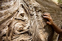 Tree Bark and hand