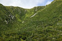 Lush forest on the Long Range Mountain.