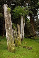 Old mortuary poles in the abandoned Haida village of Skedans.