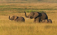 Elephant mother with young on savannah