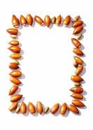 Frame of acorns on white background