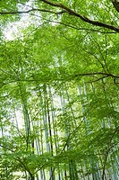 Trees and bamboo growing in forest
