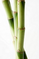 Bamboo, close-up