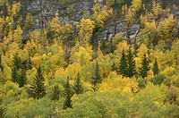 USA, South Dakota, Black Hills, forest