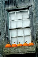 Pumpkins decorate a window on Halloweeen, Pennsylvania, USA