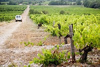 Vineyards in Vaucluse, Provence, France
