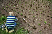 Boy 5_6 planting crops in field