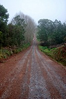 Dirt Road, Rio Grande do Sul, Brazil