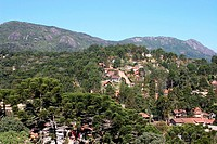 Araucaria, Monte Verde, Camanducaia, Minas Gerais, Brazil