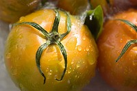 Tomatoes (thumbnail)