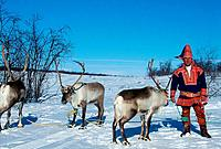 Man in traditional clothes with Reindeer, Lapland, Norway, Rangifer tarandus, Sami