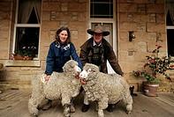 merinos sheeps, grempians, australia