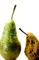 Close_up of two pears