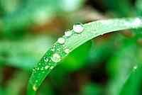 Rain drop from leaf